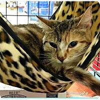 Adopt A Pet :: Charity - Lancaster, CA