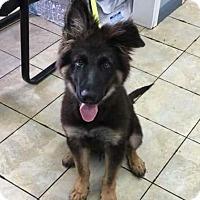 Adopt A Pet :: Barkley (aka A.Wolf) - Vidor, TX