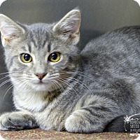 Adopt A Pet :: Terry - Marlinton, WV