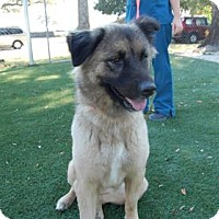 Adopt A Pet :: Romona - Bradenton, FL
