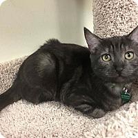 Adopt A Pet :: Chickpea - Santa Ana, CA