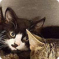 Adopt A Pet :: Mint - Queenstown, MD