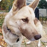 Adopt A Pet :: Ruben (Adoption Pending) - Morrisville, NC