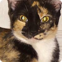 Adopt A Pet :: Gretchen - Phoenix, AZ