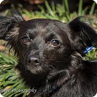Adopt A Pet :: Midnight - Daleville, AL