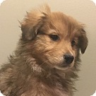 Adopt A Pet :: Nairne