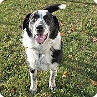Adopt A Pet :: Susie - Chewelah, WA