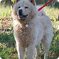 Adopt A Pet :: Callan - Holland, MI