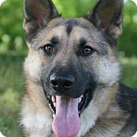 Adopt A Pet :: Mavrik - Nashville, TN