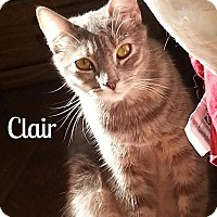 Adopt A Pet :: Clair - Simi Valley, CA