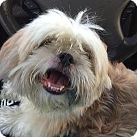 Adopt A Pet :: Maggie - Davie, FL
