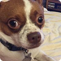 Adopt A Pet :: Elliott - San Francisco, CA