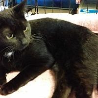 Adopt A Pet :: Frenchy - Marietta, GA