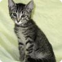 Adopt A Pet :: Odie - Powell, OH