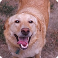 Adopt A Pet :: Maggie Mae - Hagerstown, MD