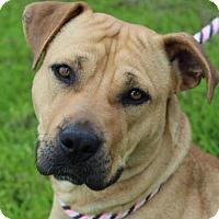 Adopt A Pet :: KAYLYNN Low $30 Fee SpayChip - Red Bluff, CA
