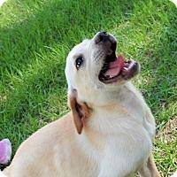 Adopt A Pet :: Molly - Bozrah, CT
