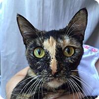 Adopt A Pet :: Belle - Mansfield, TX
