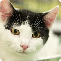 Adopt A Pet :: Charles - Great Falls, MT