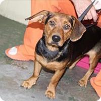 Adopt A Pet :: Alex - Woodstock, IL