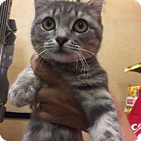 Adopt A Pet :: Frisky - Pulaski, TN