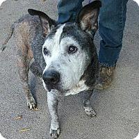 Australian Cattle Dog Mix Dog for adoption in Ashtabula, Ohio - Jordan