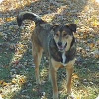 Adopt A Pet :: Lucy - Greeneville, TN