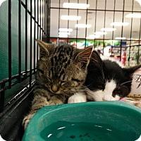 Adopt A Pet :: Lennie - Avon, OH