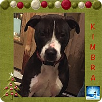 Adopt A Pet :: Kimbra - Washington, PA