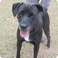 Adopt A Pet :: Bella - Newport, NC