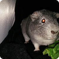 Adopt A Pet :: Kelly aka Magnus - Aurora, CO