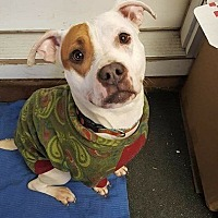 Adopt A Pet :: Emily - Lakeville, MN