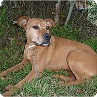 Adopt A Pet :: PENNY - Mission Hills, CA