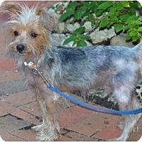Adopt A Pet :: Echo - Miami, FL