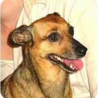 Adopt A Pet :: Adelade - Kingwood, TX