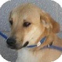 Adopt A Pet :: Jack - Hamilton, ON