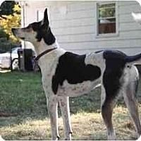 Adopt A Pet :: Smokey - Albany, NY
