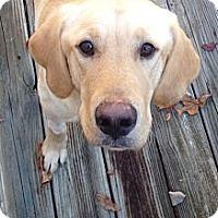 Adopt A Pet :: Bentlee - Richmond, VA