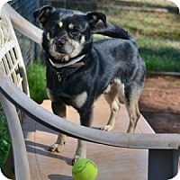 Adopt A Pet :: Biz - Athens, GA