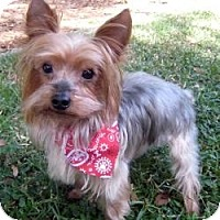 Adopt A Pet :: Rocky - Leesburg, FL