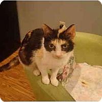 Adopt A Pet :: Tandoori--PETSMART - Muncie, IN