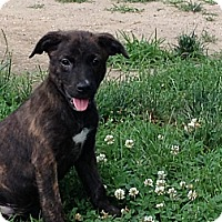Adopt A Pet :: Baby Chase - Marlton, NJ