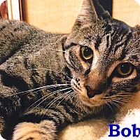 Adopt A Pet :: Bobby - Foothill Ranch, CA