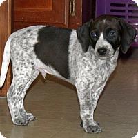 Adopt A Pet :: Motley - Knoxville, TN