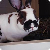 Adopt A Pet :: Ernie - Watauga, TX