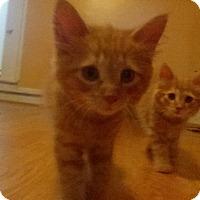 Adopt A Pet :: Goldie - East Brunswick, NJ