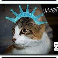 Adopt A Pet :: Maggie - Albuquerque, NM