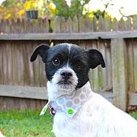 Adopt A Pet :: Carlos loves to play! - Redondo Beach, CA