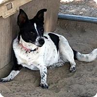 Adopt A Pet :: Sweet Pea - Lemoore, CA
