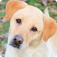 Adopt A Pet :: IVY(TRAINED-SO SMART!! - Wakefield, RI